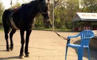 Finde deine Pferdestärke