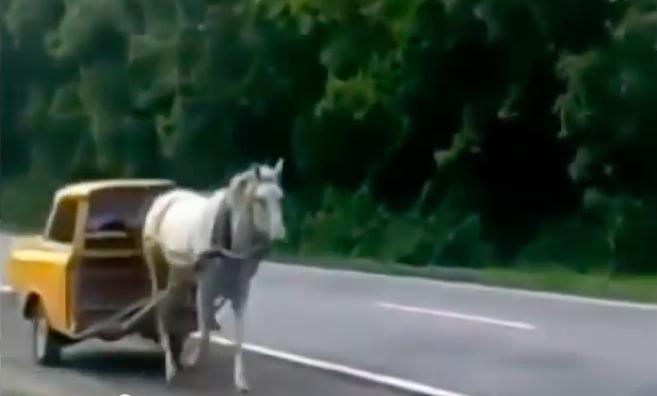 petranovskaja_pferd2