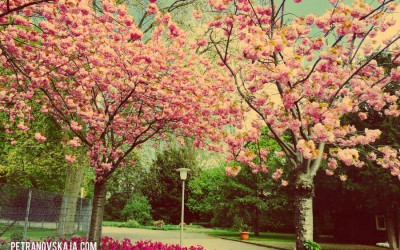 Warum manche Bäume im Frühling so atemberaubend schön sind